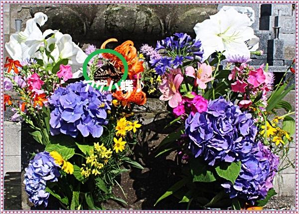 IMG_9129_2015081418065614b.jpg