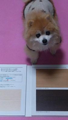s-DSC_2029_20150225070449c9d.jpg