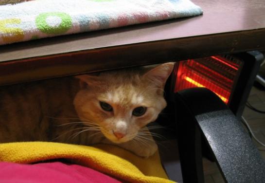 「ペット用あったか電熱ホットカーペット」-2