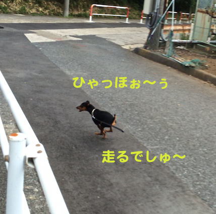 20150811-1.png
