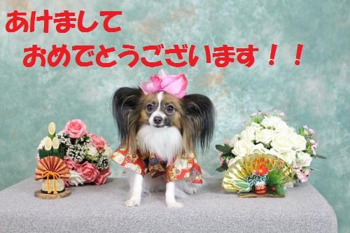 IMG_0898_convert_20141231232828.jpg