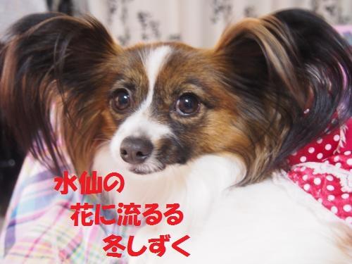 P1152278_convert_20150115081358.jpg