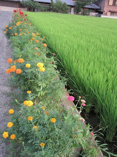 母の道端の花壇夏 27.7.29