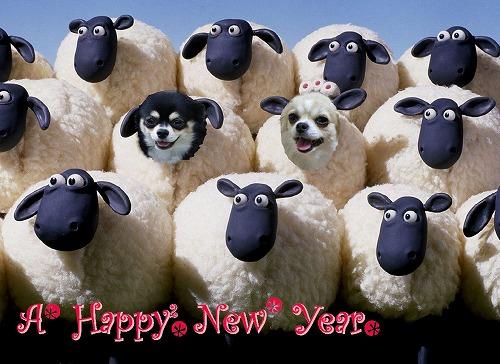 羊2015-4