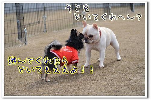 鶴見D20150125 (9)