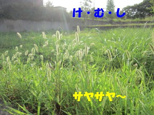IMG_1869.jpg