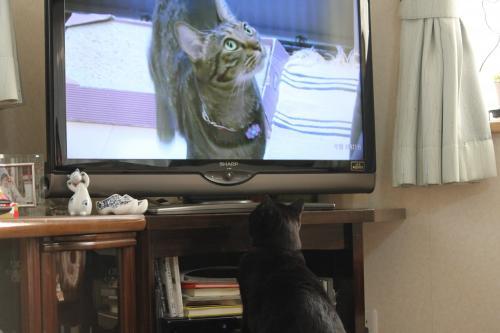 テレビ 5