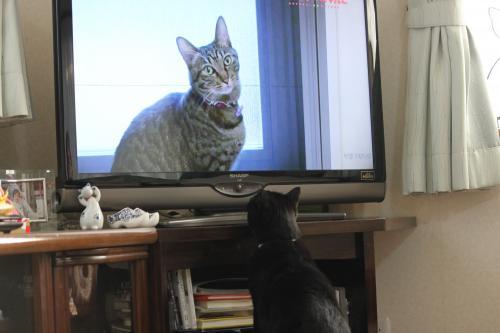 テレビ 4