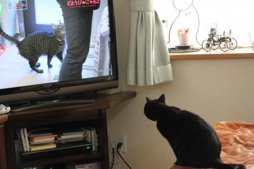 テレビ 3