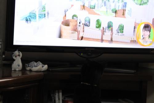 テレビ 1