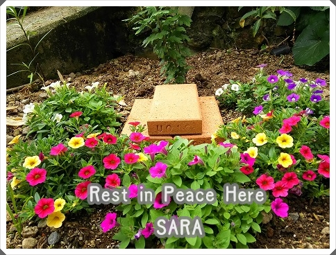 sara Rest in Peace Here