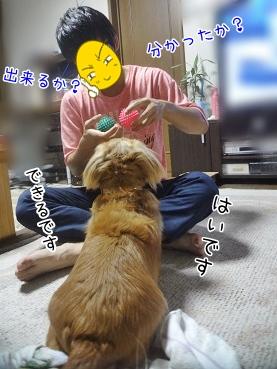 kinako3121.jpg
