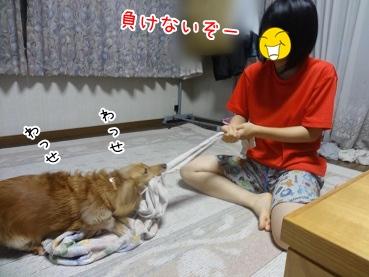 kinako3128.jpg
