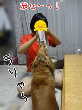 kinako3129.jpg