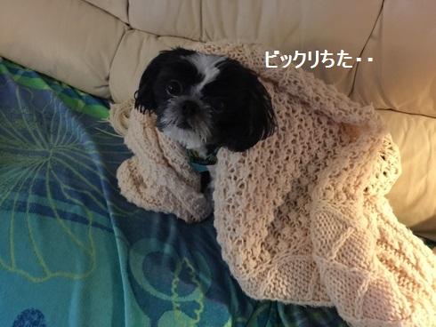 IMG_5138moji.jpg
