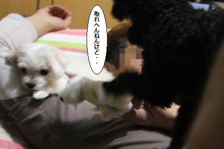 IMG_7106_1555あ6s0089qqwkmsんdじぇrr55