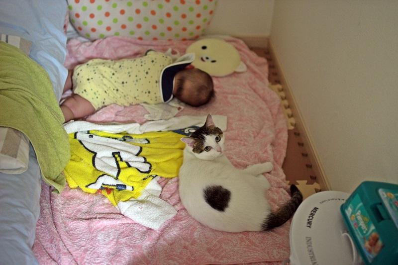 nobunobu12300512.jpg