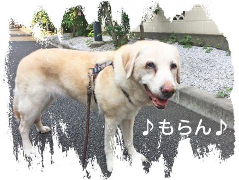 150801 暑〜〜〜っ