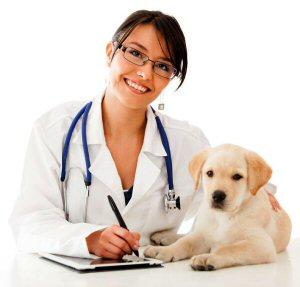 01a 300 veterinarian