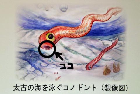 DSC_0904koko.jpg