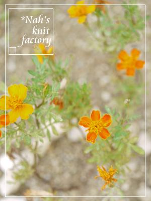 garden2015-86.jpg