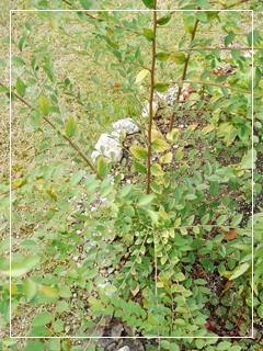 garden2015-88.jpg