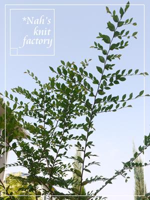 garden2015-92.jpg