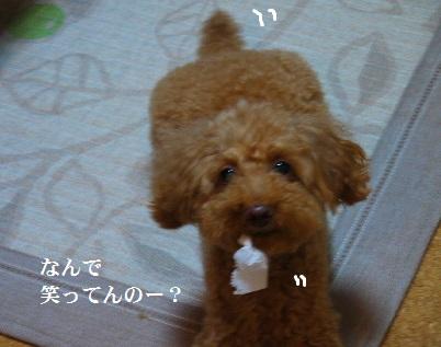 P1390573(1).jpg