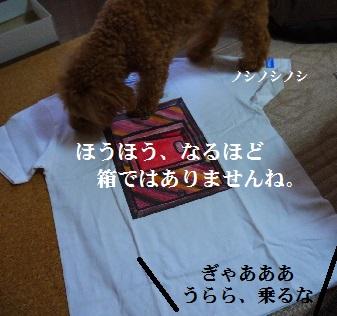 P1390839(1).jpg