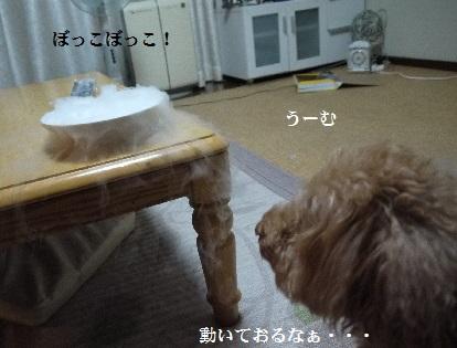 P1390889(1).jpg