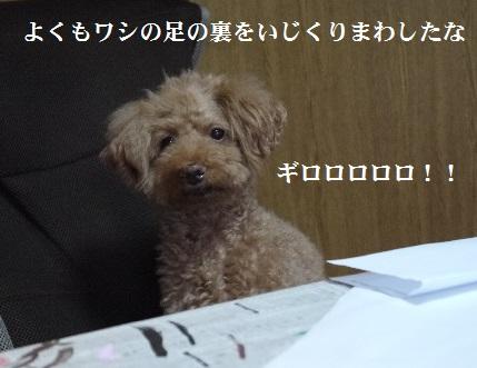 P1400711(1).jpg