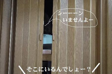 P1400779(1).jpg
