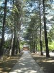 諏訪神社(立川)03