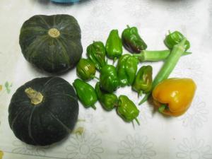8-11収穫