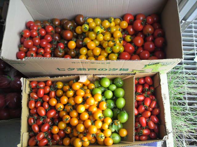 トマト全種