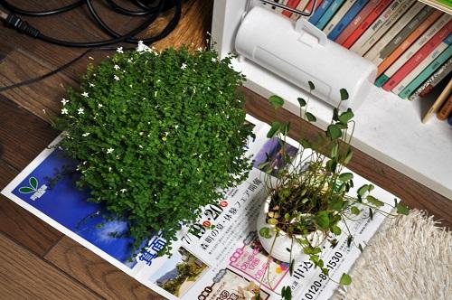避難する植物