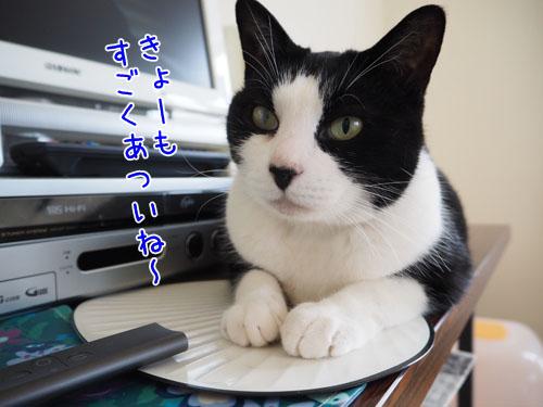 P7170034_2.jpg