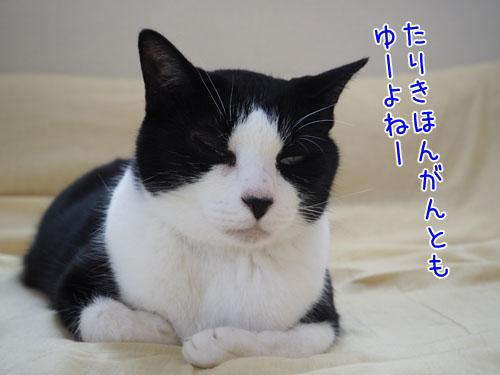 P8070016_2.jpg