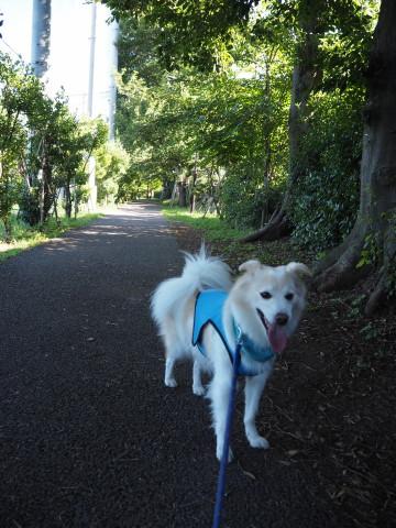 h27,7公園散歩アロー3