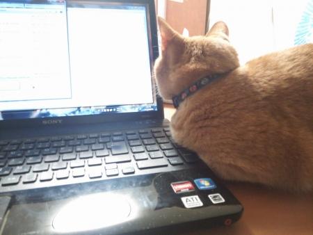 微妙に邪魔な猫