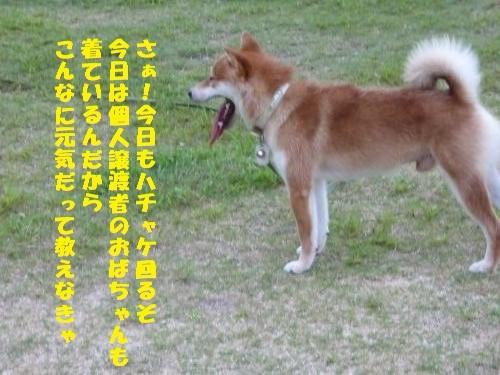 P1000333_convert_20150820104459.jpg