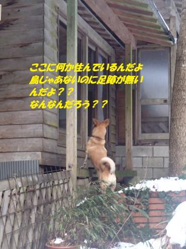 P1030007_convert_20150104123547.jpg