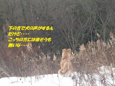 P1030015_convert_20150104123857.jpg
