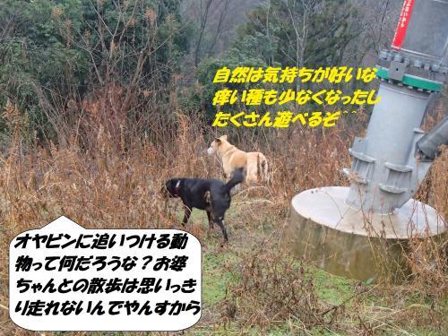 P1070072_convert_20150109082047.jpg