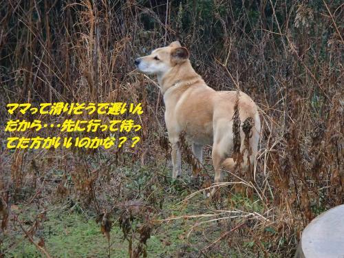 P1070073_convert_20150109075440.jpg