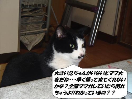 P1140150_convert_20150115112424.jpg