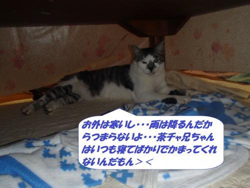 P1150159_convert_20150116141658.jpg