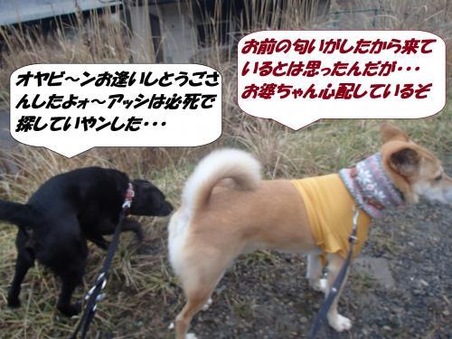 P1160162_convert_20150116141728.jpg
