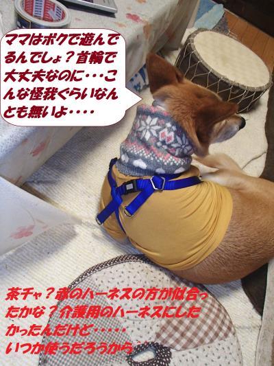 P1170166_convert_20150117093055.jpg
