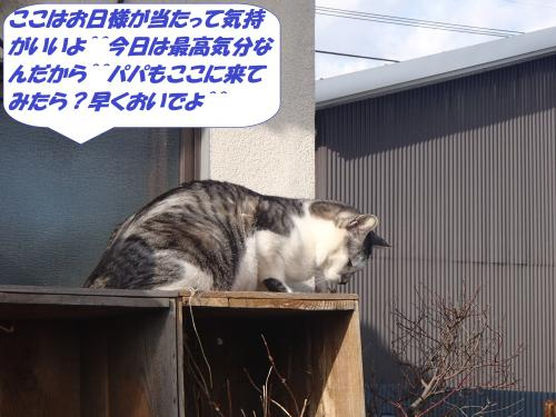 P1180175_convert_20150119104854.jpg